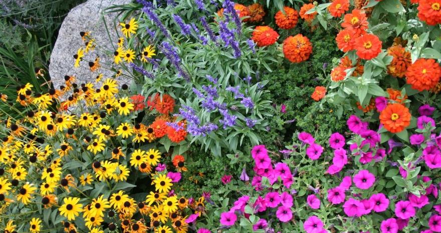 Semená kvetov