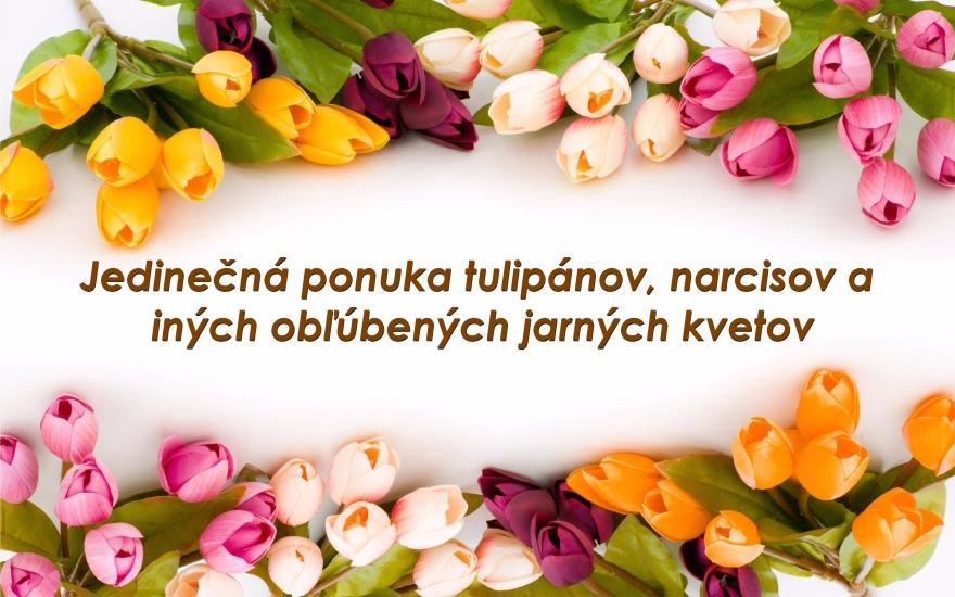 Cibule jarných kvetov
