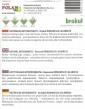 Brokollica Romanesco Calabrese Antioxidant