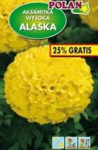 Aksamietnica vysoká plná žltá ALASKA