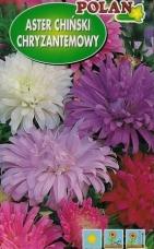 Astra čínska chryzantémová zmes farieb