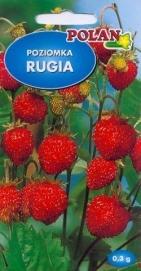 Jahoda lesná RUGIA