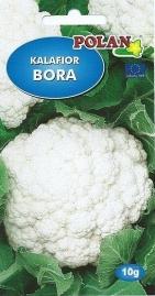 Karfiol Bora