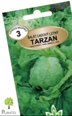 Šalát ľadový letný – TARZAN MoravoSeed