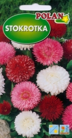 Sedmokráska pomponkovitá zmes farieb