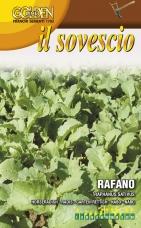 Chren dedinský - zelené hnojenie - 100 g